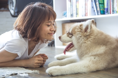 animal-communication-dogs-cats-energy-connection