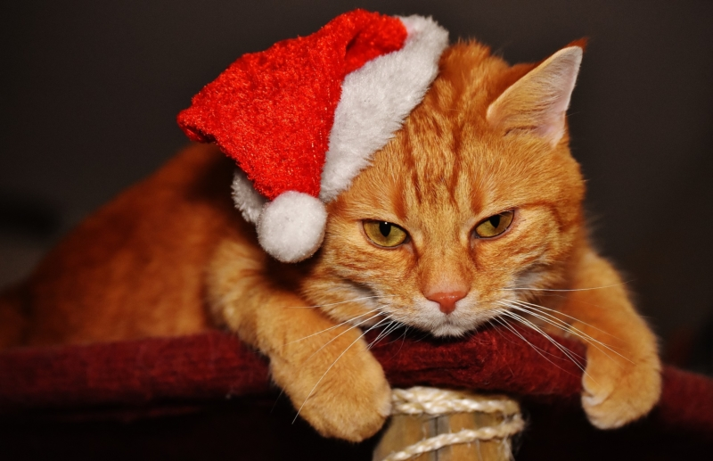 Christmas-cats-dogs-safety-holidays