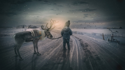 reindeer-christmas-dasher-blitzen-animal-communication