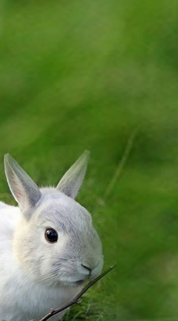 darcy-pariso-animal-communication-rabbit