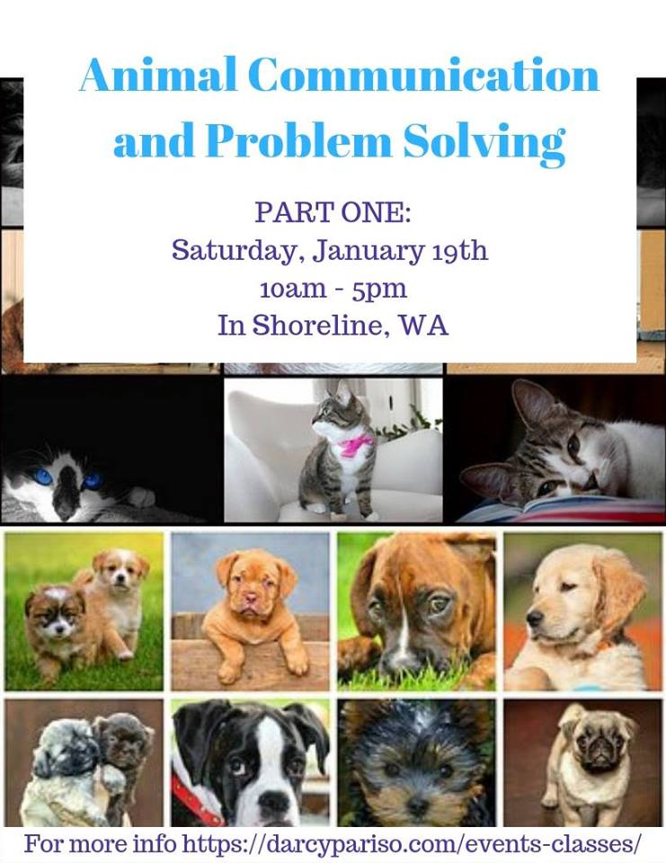 darcy-pariso-animal-healing-about