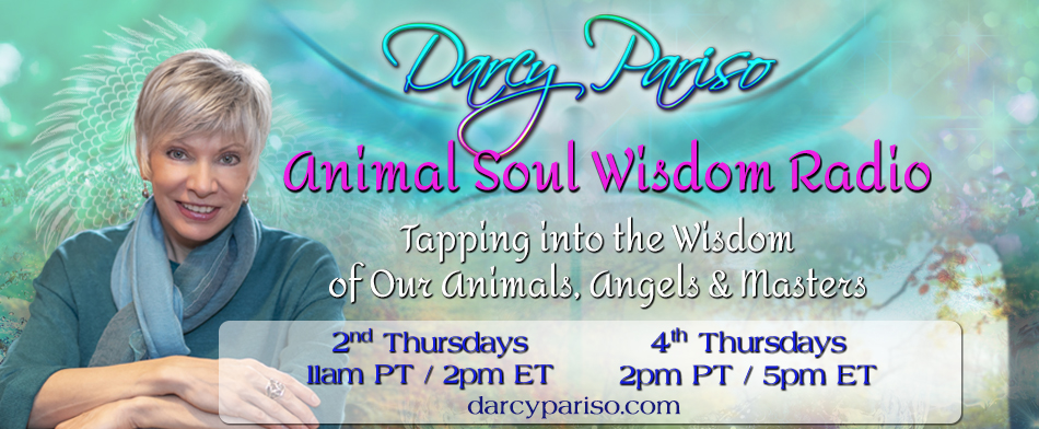 animal soul wisdom radio with darcy pariso-2019
